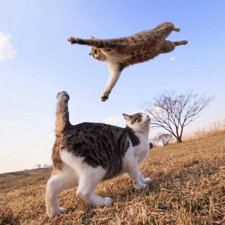 Да, коты-бойцы умеют летать!