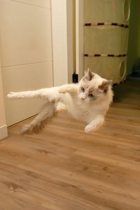 Коты-бойцы умеют летать