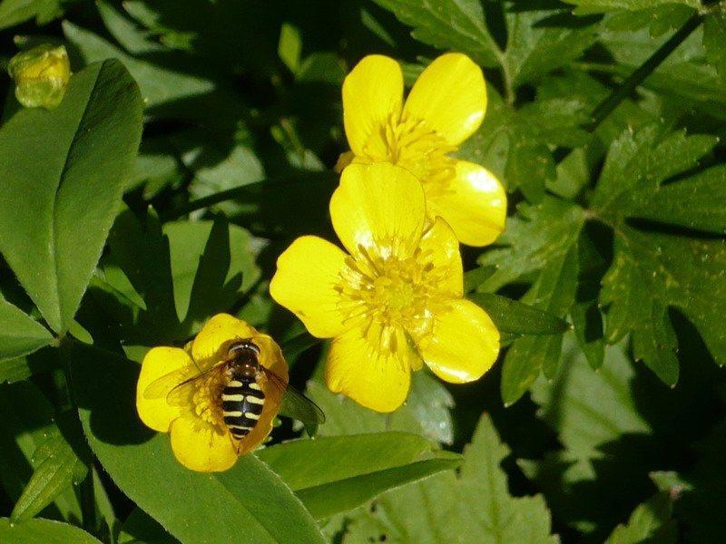 Желтые цветы фото