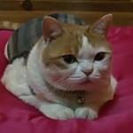 Кошка-буддист из Южной Кореи