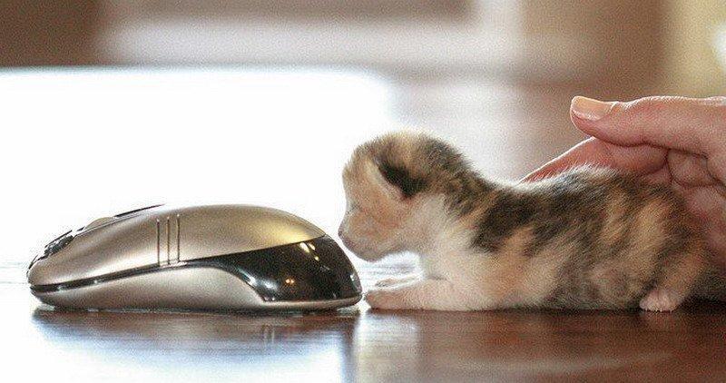 Кусочек позитива-котики фото