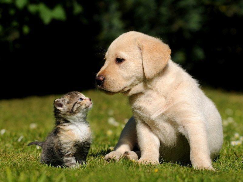 фото котенок и щенок