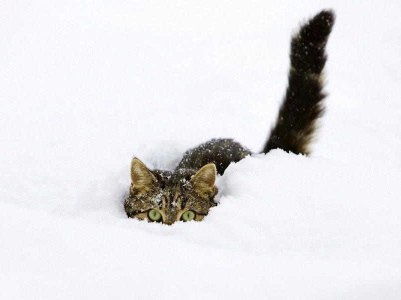 фото кота на снегу