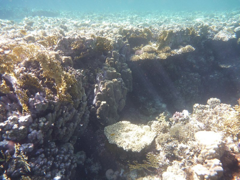 коралловая стена фото