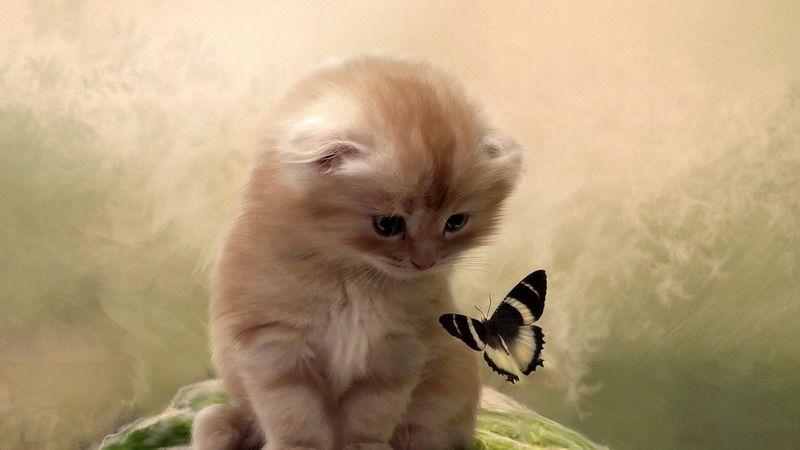фото котенок, бабочка