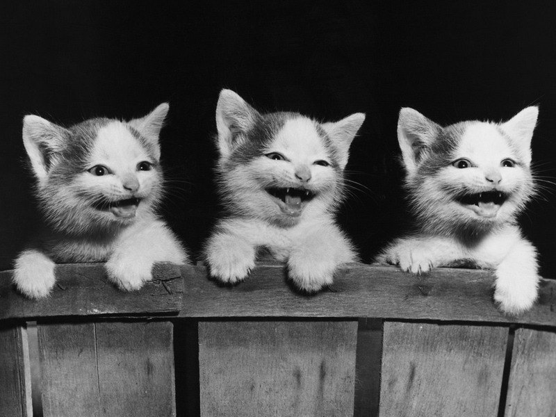 фото котята смеются