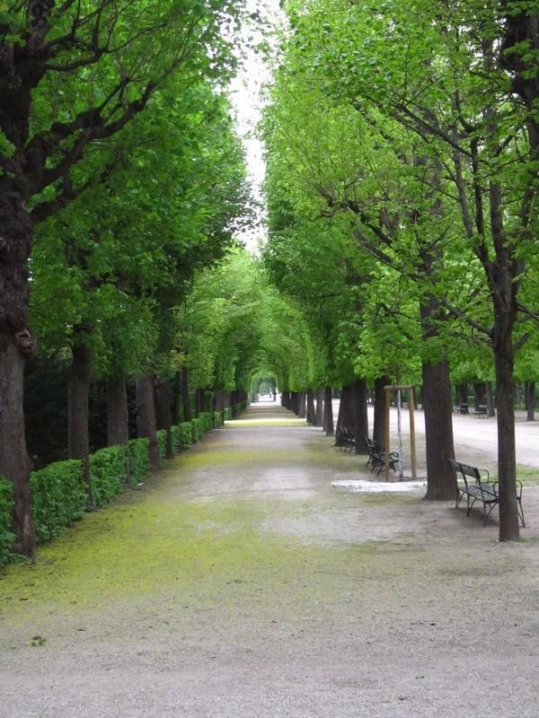 арка из деревьев в парке Шенбрунна(Вена)
