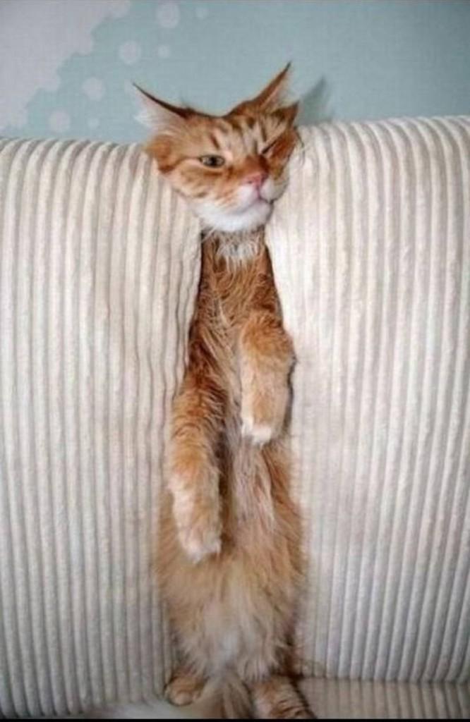 фото рыжего кота в диване