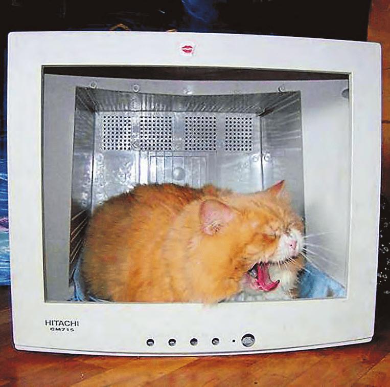 фото рыжего кота в телевизоре