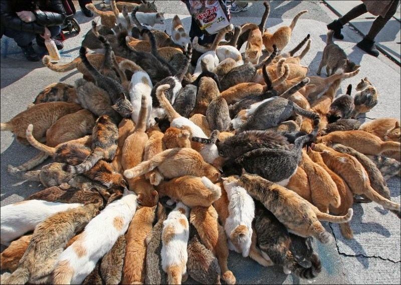 котомешанина-много кошек-фото