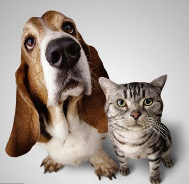 кот и пес-фото