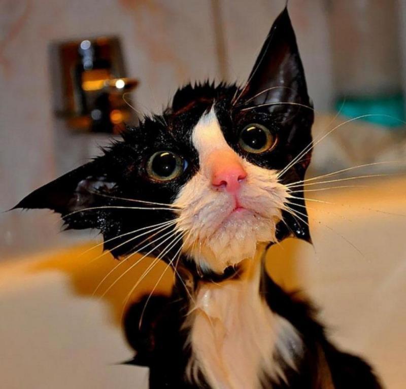 еще один мокрый котик