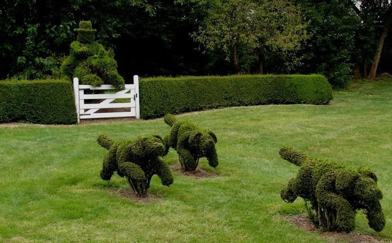 собаки-топиари