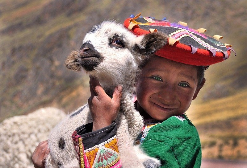 фото детеныш ламы