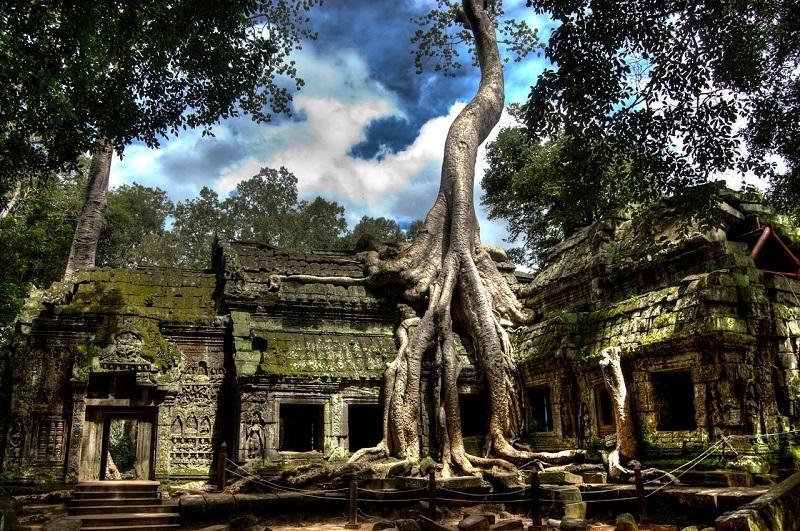 хлопковое дерево  фото