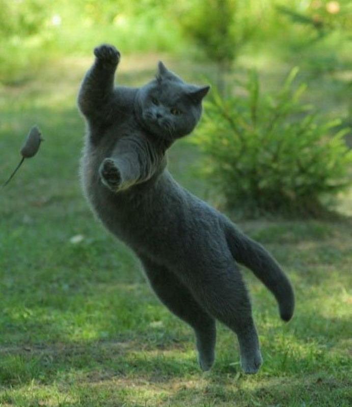кот-мышелов фото