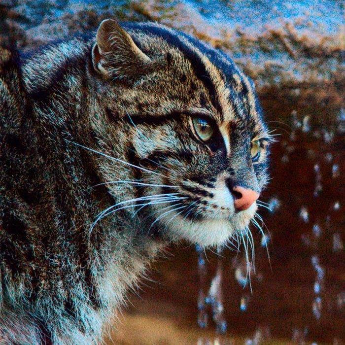 рыбья кошка фото