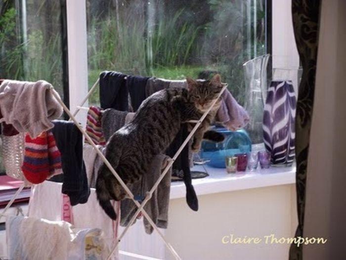 мокрый кот на сушилке