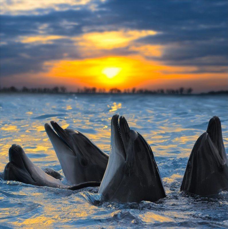 delfiny-na-rassvete