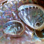 Перламутр морских раковин