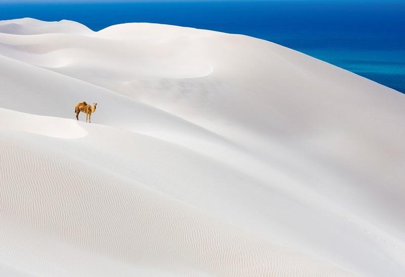 foto_verblyuda_v_pustyne