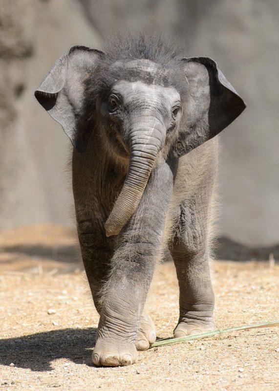 foto-slonenok