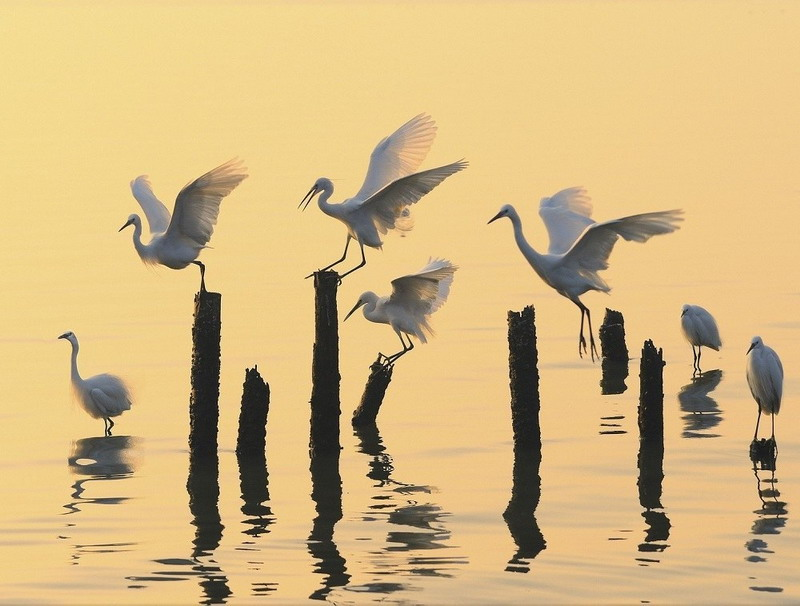 красивое фото-птицы на желтом фоне