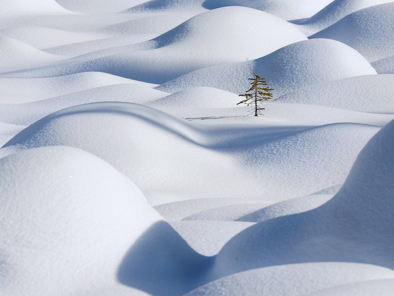 минимализм в природе15