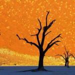 Минимализм в природе