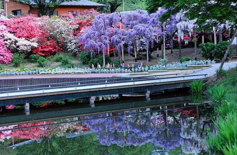 парк цветов Асикага(Япония)