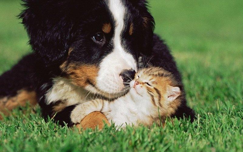 позитивное фото-щенок и котенок