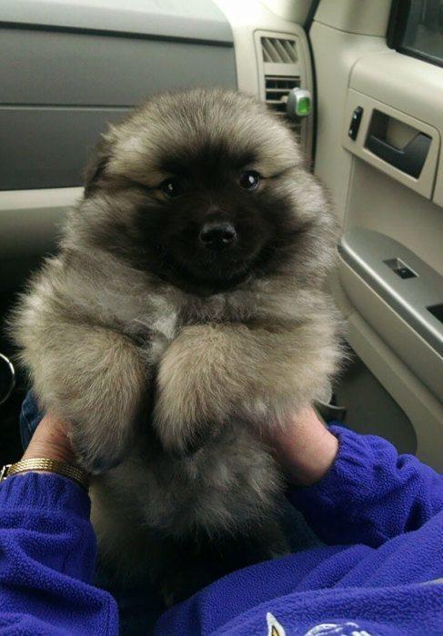 мохнатый щенок фото