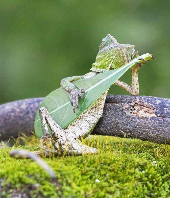 фото ящерица музицирует