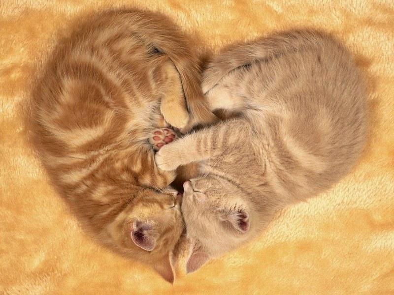 фото котики валентинки