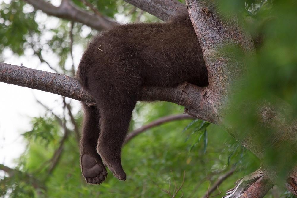 мишка уснул на дереве