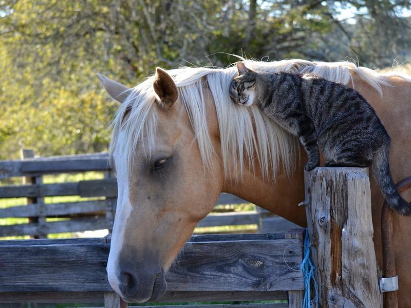 дружба между животными фото