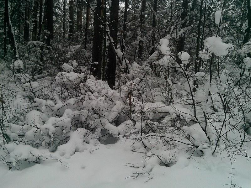пушистый снег фото