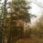 Тропинка в лесу (фото)