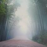 Бамбуковый лес — фото в тумане