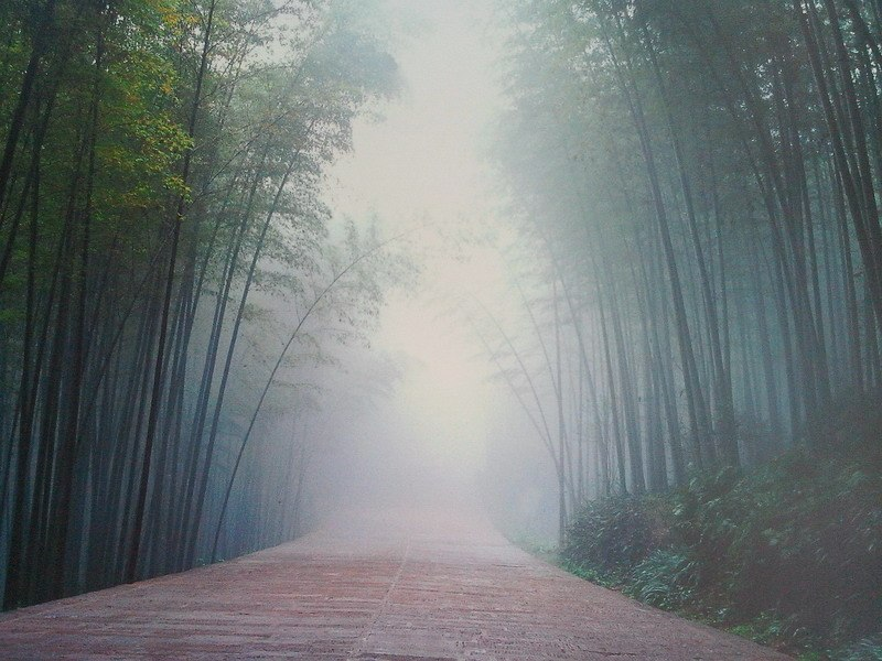 бамбуковый лес фото в тумане