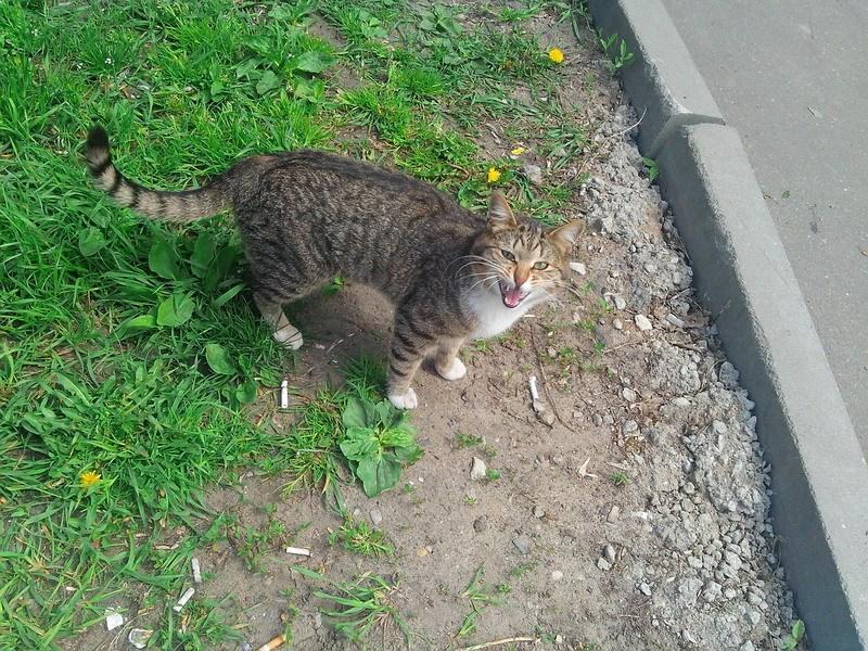 уличный котик фото