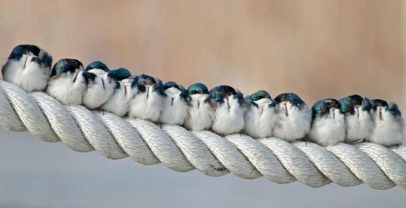 гирлянда из птиц