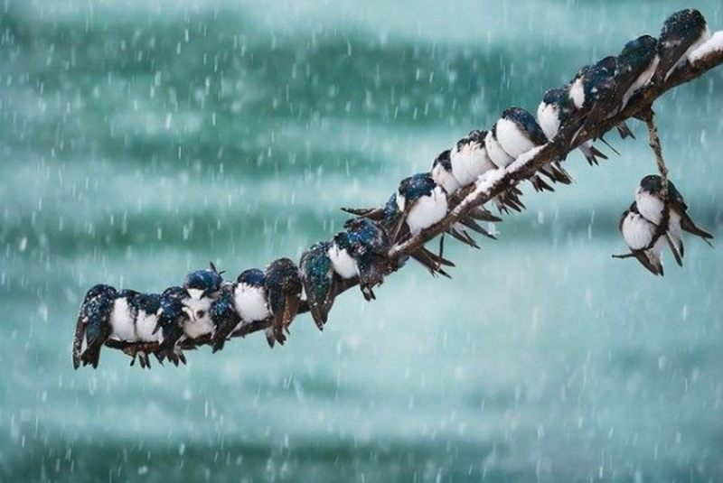 птицы на ветке1
