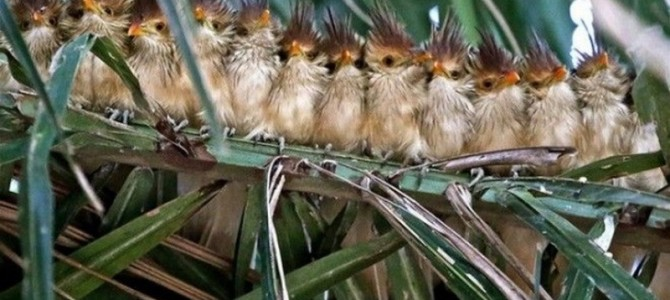 Забавные фото — гирлянды из птиц