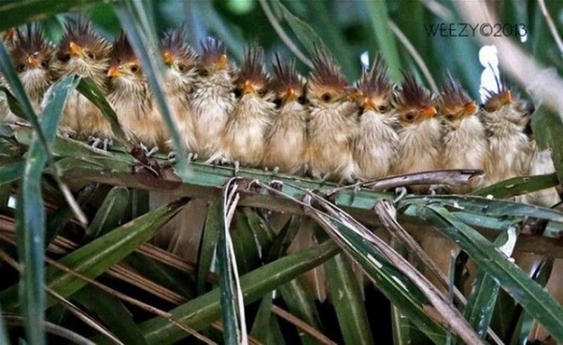 птицы на ветке4