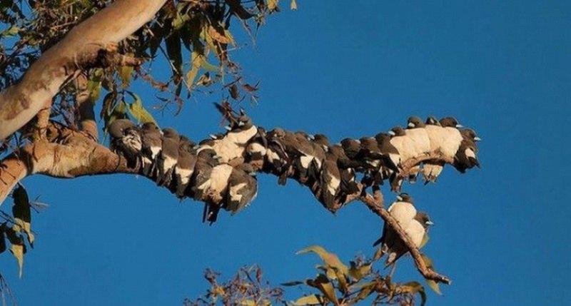 птицы на ветке5