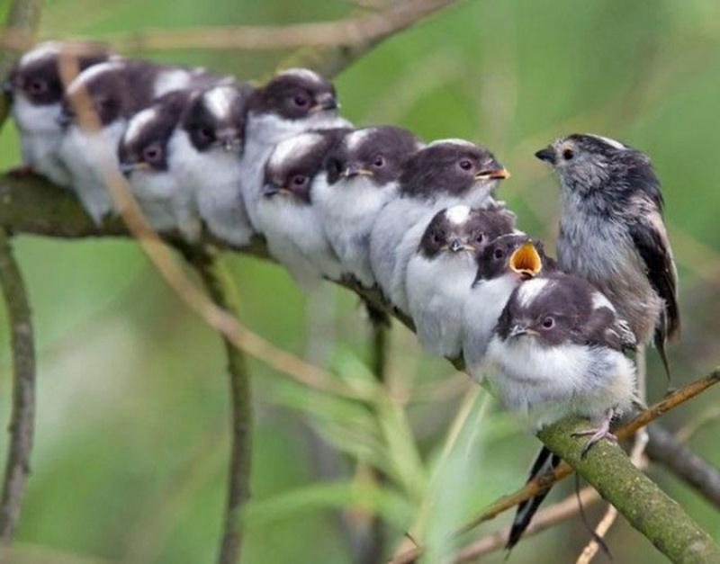 птицы на ветке6