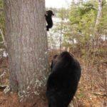 Бурый медвежонок — фото с мамой