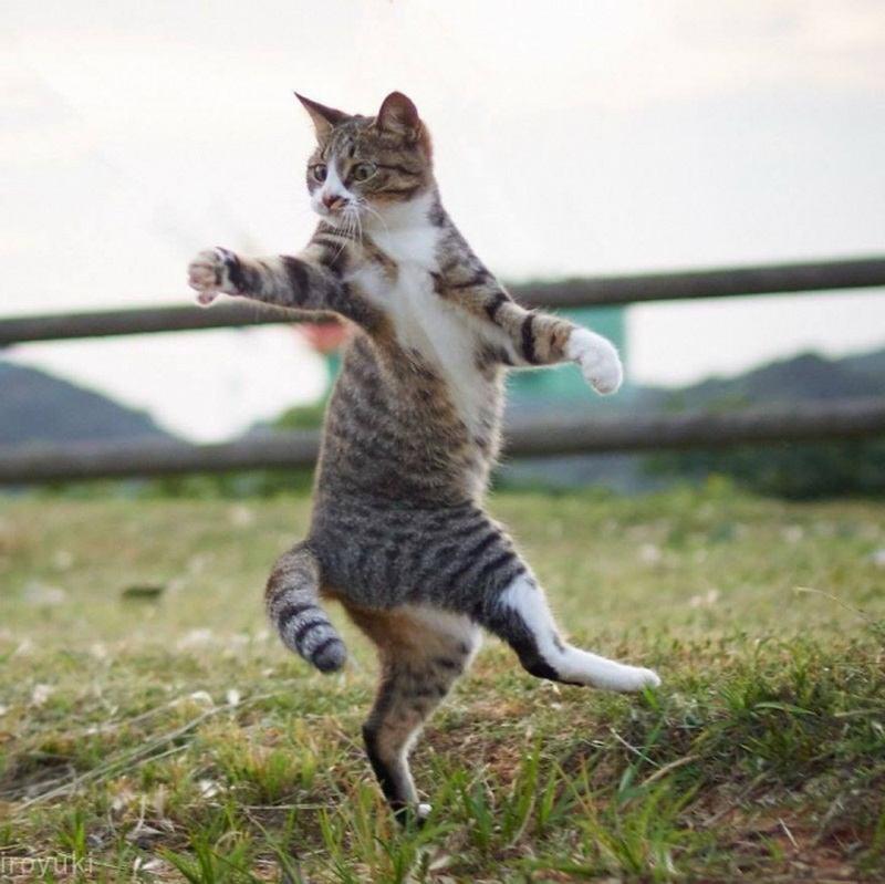 танцующий котик фото