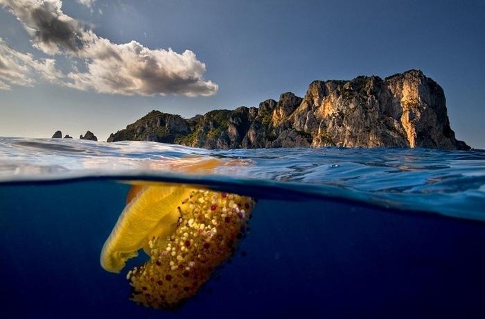 фото под водой и над водой-Алессандро Кутуньо3